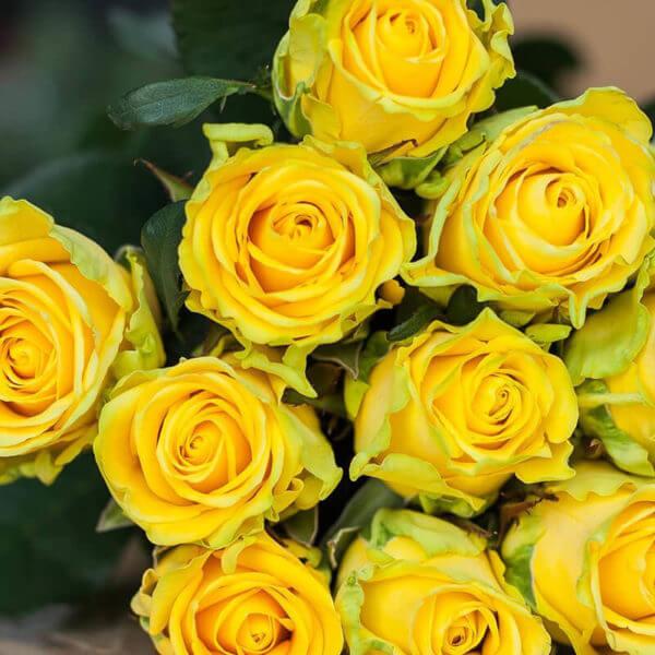 101 роза купить недорого в москве