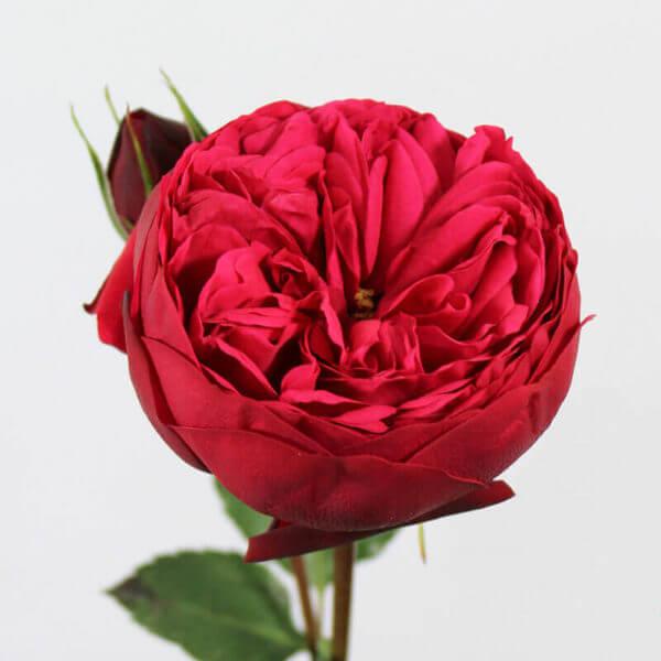 купить розы дешево в москве с доставкой