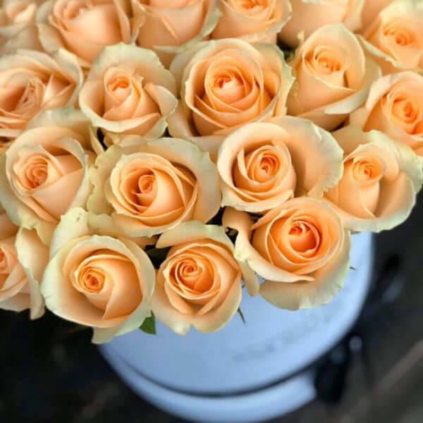 заказать 101 розу