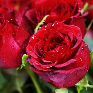 цветы на 14 февраля купить
