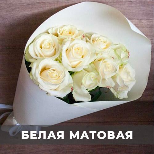 цветы 24