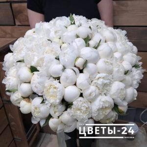 белые пионы купить в москве