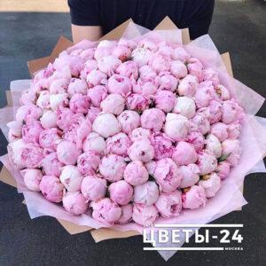 розовые пионы купить