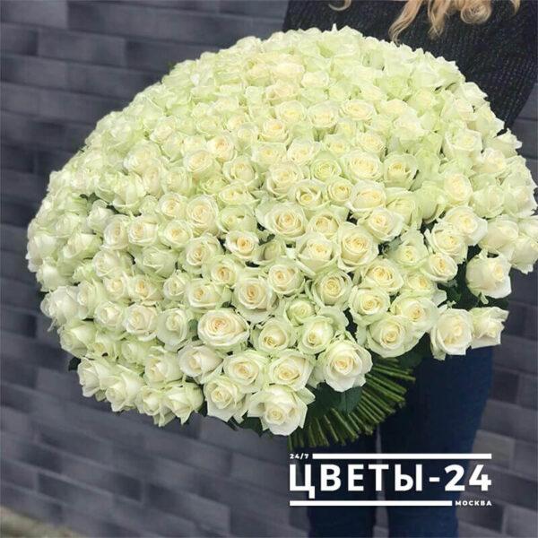 доставка 101 роза недорого