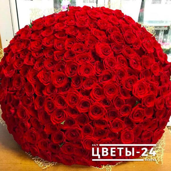 210 роза красная