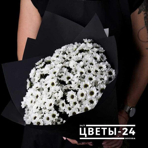 белые хризантемы купить