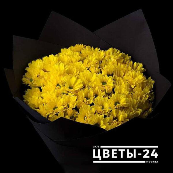 где купить хризантемы