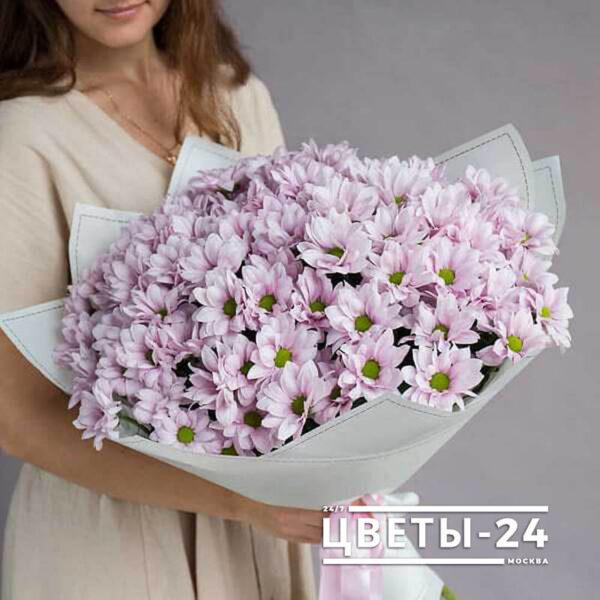 хризантемы кустовые купить