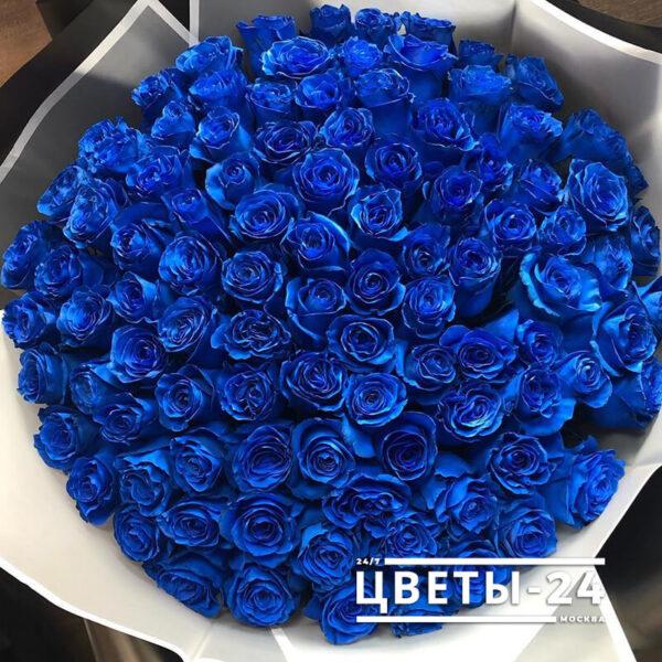 купить 101 розу синие